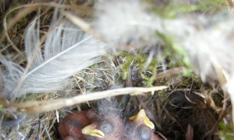 Nest size variation not related to breeding success