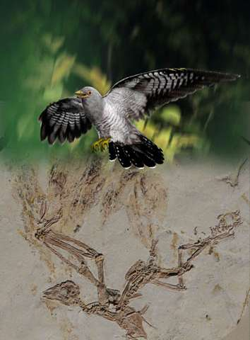 New enantiornithine bird with an aerodynamic tail found in China