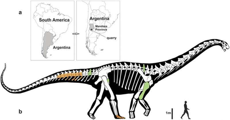 New fossil discoveries are HUGE