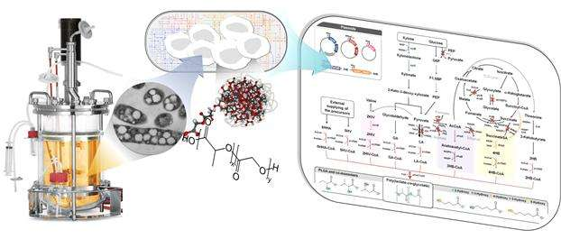 Non-natural biomedical polymers produced from microorganisms