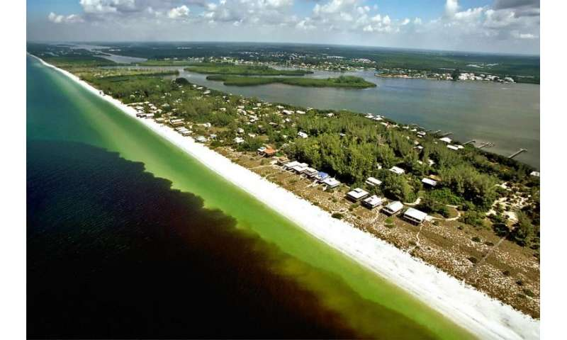 Ocean current in Gulf of Mexico linked to red tide