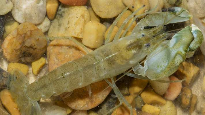 Oh, snap! What snapping shrimp sound patterns may tell us about reef ecosystems
