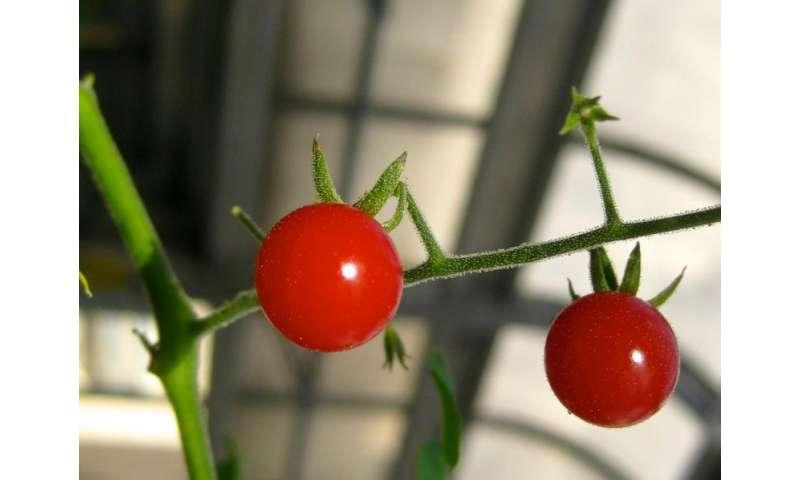 On Darwin's birthday, IU study sheds new light on plant evolution