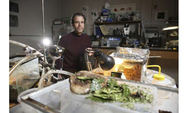 Oregon researchers document the work of leafcutter ants