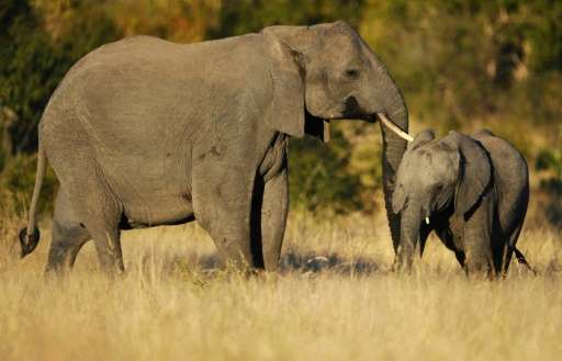 Poisoning of wildlife has occurred at a lower level in South Africa compared to its neighbours Zimbabwe and Mozambique