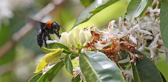 Pollinator species vital to our food supply are under threat, warn experts