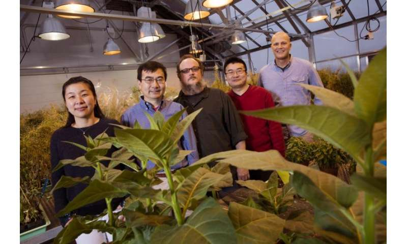 Researchers identify target of disease-causing plant pathogens