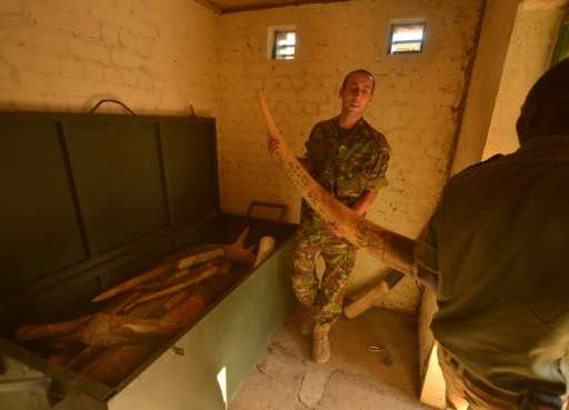 Security officials place an elephant tusk in a strong room with stockpiles of ivory confiscated from poachers in the Garamba Nat