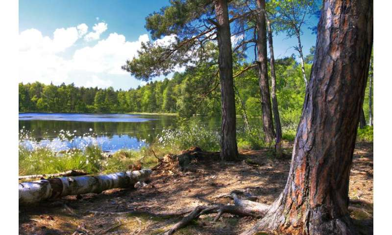 Studies show impact of forest management and deforestation on climate