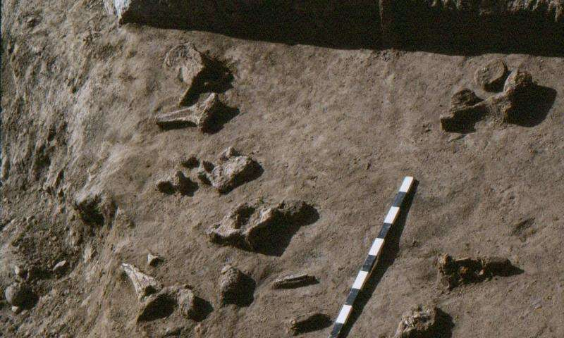 Study: Fossil record disappears at different rates