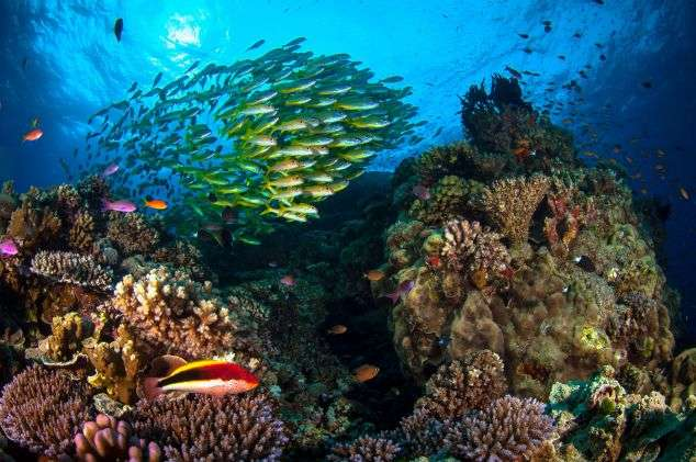 Survey shows Aussies' love and concern for Great Barrier Reef
