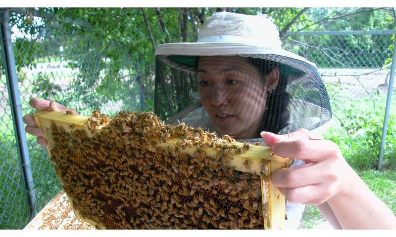 Damaged Bees