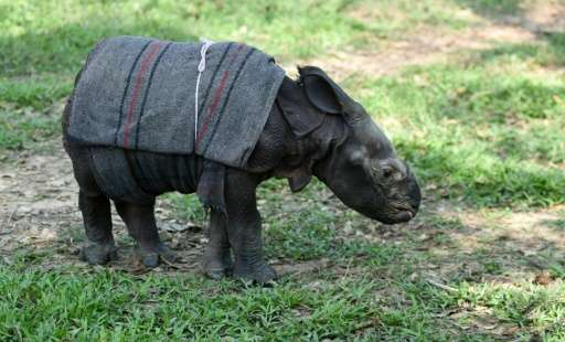 The baby rhino will be released into the wild in 2019