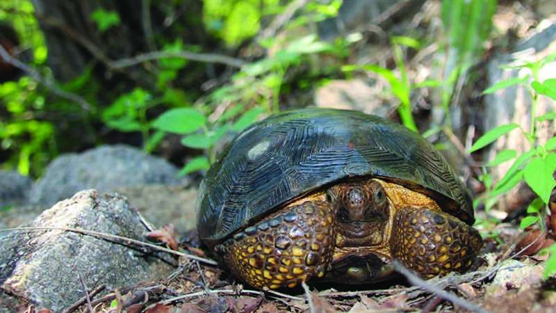 New turtle described; naming rights auctioned and trust fund set up.