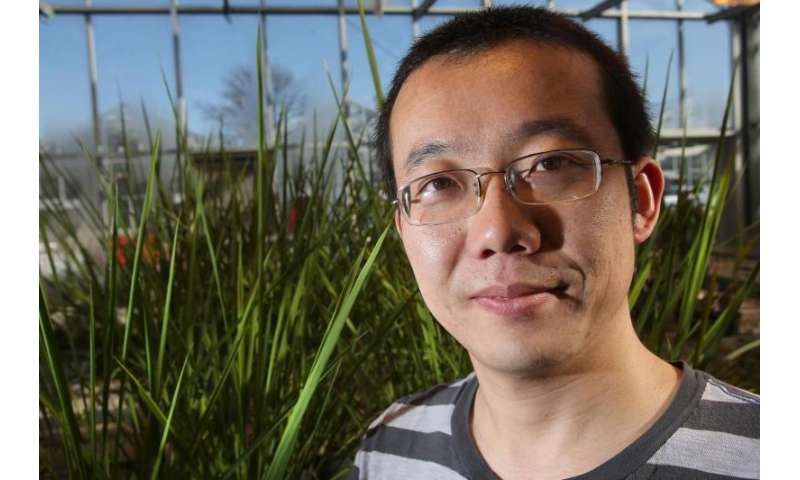 Transgenic plants' 'die and let live' strategy dramatically increases drought resistance