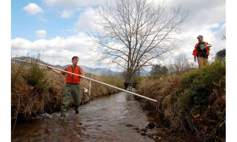 Trees vital to improving stream quality, study finds