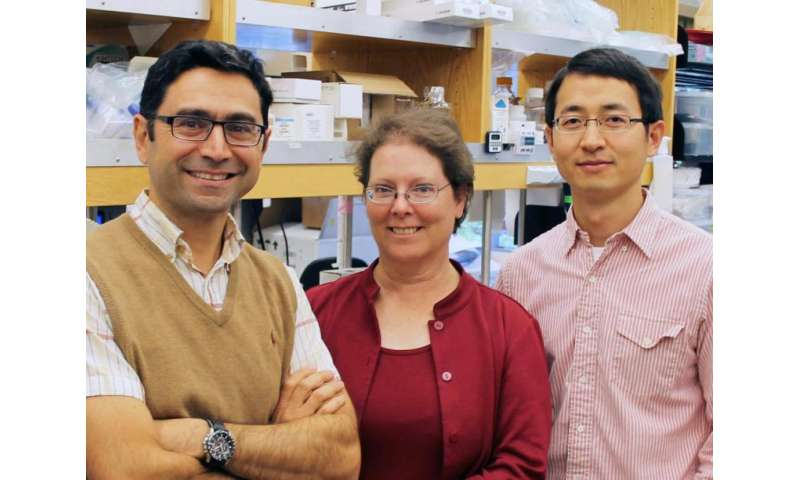 TSRI study reveals workings of mysterious 'relief valve' that protects cells from swelling