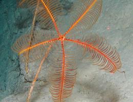 Undiscovered biological communities off the northeast coast of Australia