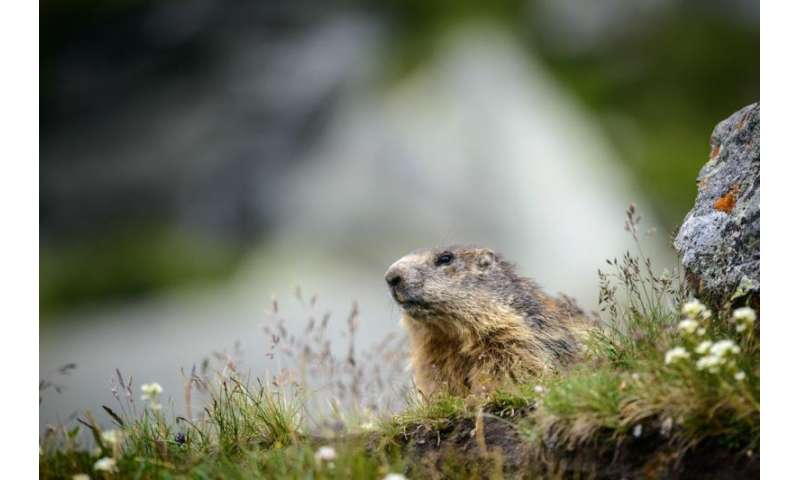 Unsaturated fatty acids play a role in winter hibernation