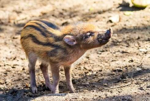 2016 using genomics to save endangered species april 14 2016