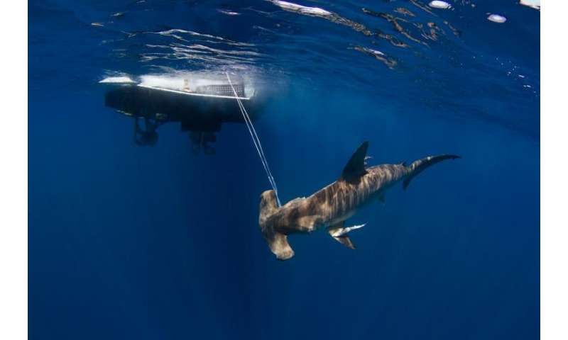 What do the world's leading shark researchers think of shark conservation policy?