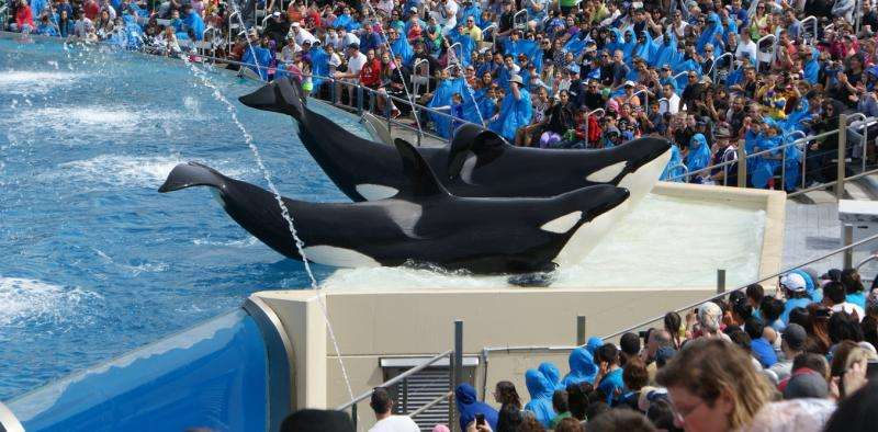 Will the end of breeding orcas at SeaWorld change much for animals in captivity?