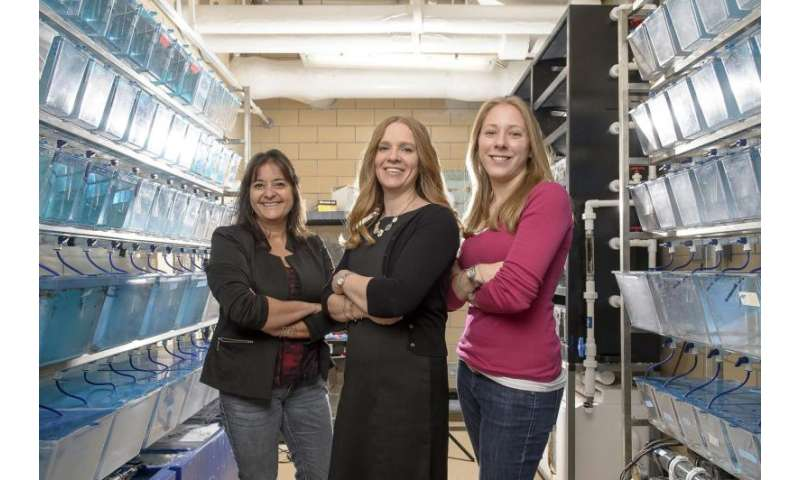 Zebrafish embryos exposed to atrazine pass on health problems to their young
