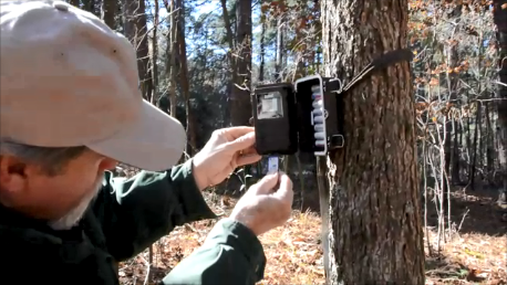 Post-hunting season management can help deer herds
