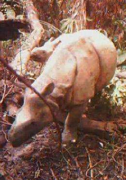 Environmentalis say there are only about 40 Javan rhinos left in the wild
