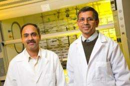 MU researchers show potential for new cancer detection and therapy method