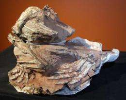 New dinosaur from Utah's red rocks