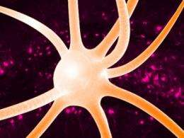 Researchers find that interneurons are not all created equally