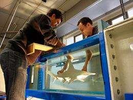 Researchers investigate fishy sense of smell