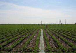 Climate change complicates plant diseases of the future