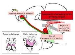 Study identifies fear responses in zebrafish