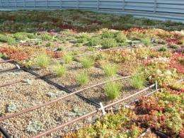 5 standout species for extensive green roofs