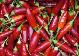 New evidence that chili pepper ingredient fights fat