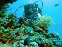 Scientists say corals are vital to marine life because they provide habitats for a vast variety of creatures