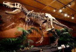 A 66-million-year-old Tyrannosaurus rex skeleton dubbed