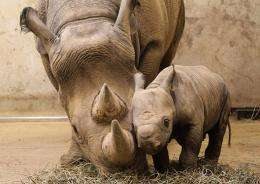 A black rhinoceros calf and its mother Kati Rain