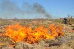 Aboriginal hunting and burning increase Australia's desert biodiversity, researchers find