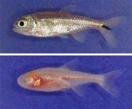 Adapting to darkness: How behavioral and genetic changes helped cavefish survive extreme environment