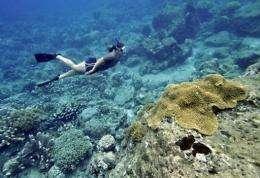 A diver explores a coral reef