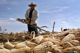 A Mexican farmer works at his plot of corn in Puebla state, Mexico, in 2007