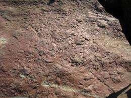 Ancient reptiles 'make tracks'