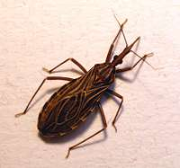 Anti-Parasite Drugs for Neglected Chagas Disease Are in the Works