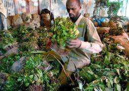 A Somali trader takes khat out of bags