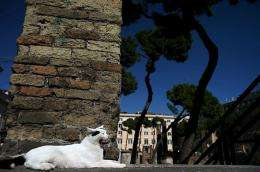A stray cat enjoys the sun in the ruins of the ancient Roman's temples
