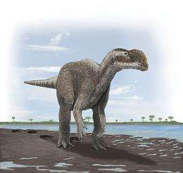 Australia's biggest carnivorous dinosaur forced to take a walk