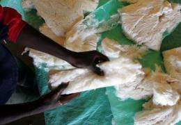 A worker checks the quality of organic cotton
